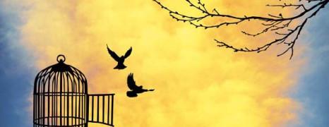 Svoboda v vpletenosti